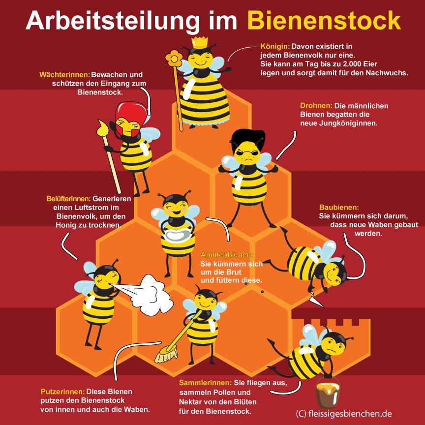 Arbeitsteilung im Bienenstock